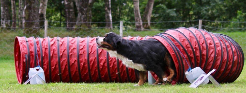 Hund i rally-lydighet